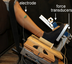 Muscle Electrical Stimulation